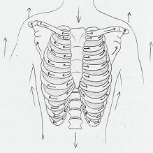 Human Corkscrew 1b